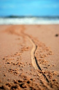 Long-line-in-the-sand